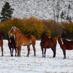 Get Your Horses And Barn Winter-Ready In The Fall