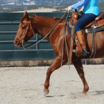 Help! My Horse Won't Stay on the Rail