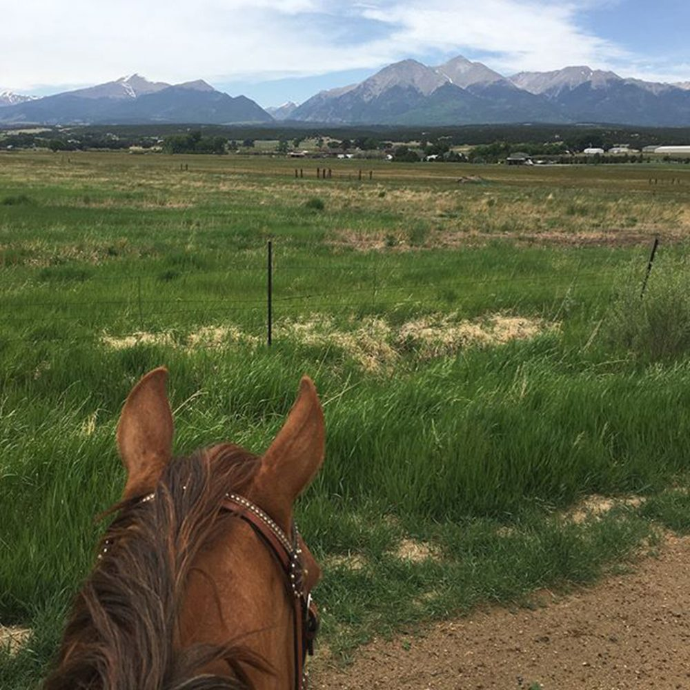 View of he mountains through Annie's ears.
