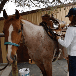 Back to Basics: Part 2, Square-One in the Riding Arena