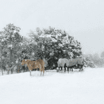 Horse Report March 2019