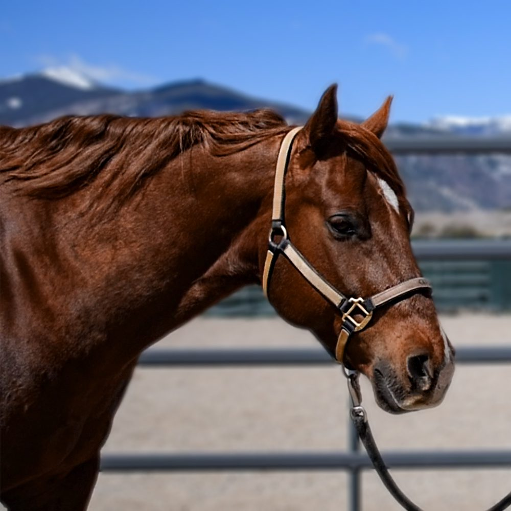 Equine Good Citizen Award: Is your horse eligible?