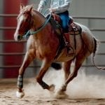 July 2019 Horse Report