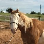Helping Horses in Need—It Takes a Village