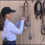 Myler 3-Ring Combination Bit: Unpacking and Assembling with a Western Headstall