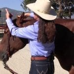 Myler Curb Bit: Bridling and Unbridling with a Western Headstall