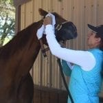 How to Make Your Horse Look Like a Supermodel