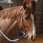 Get a Handle on Your Reins