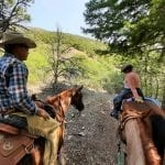 The Making of a Trail Horse