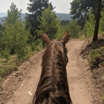 The Making of a Trail Horse, Part 2