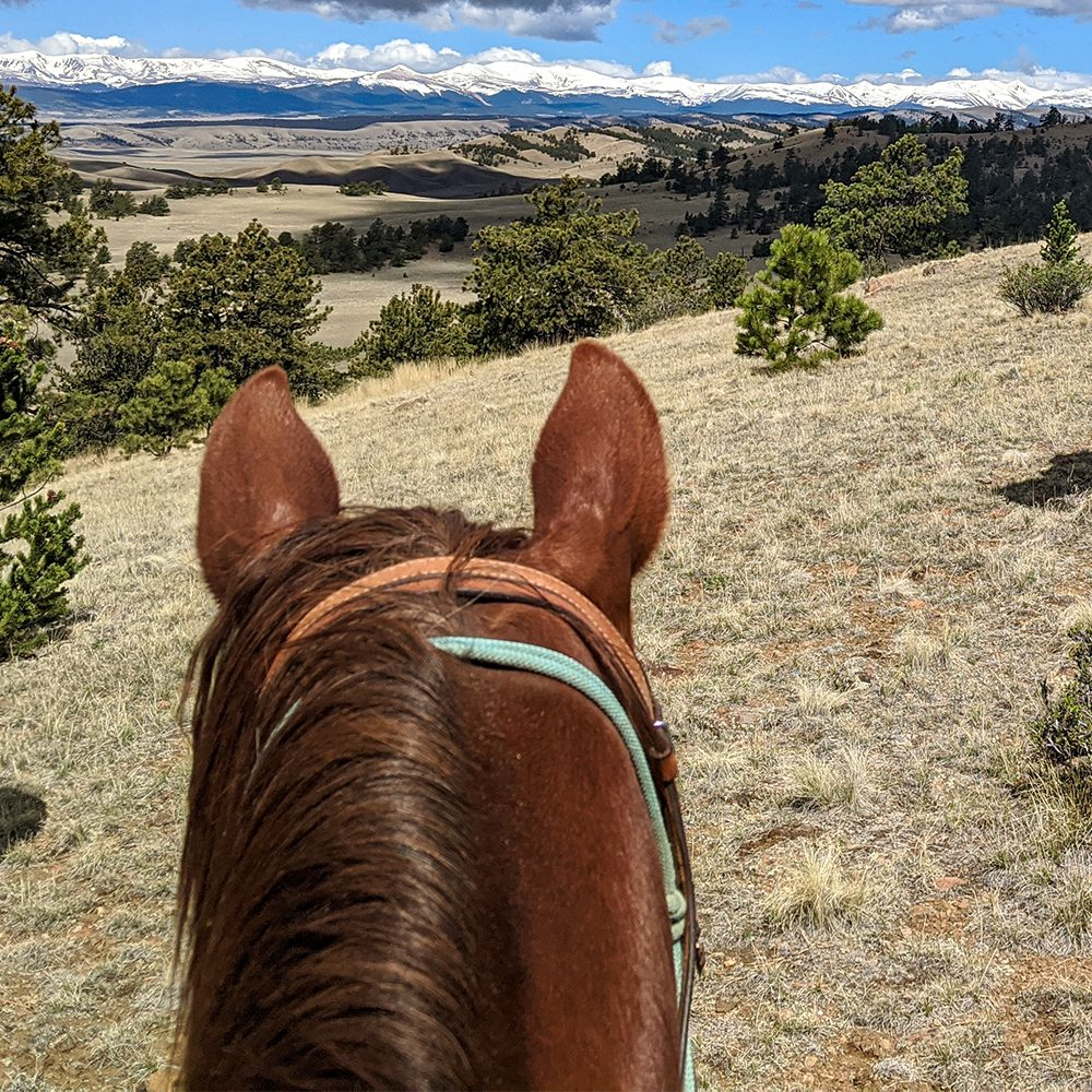 View from behind horse's ears of treed hills and mountain range.