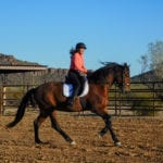 Canter Hacks | Part 1 of 2