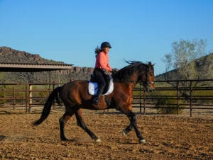 Julie cantering a warmblood in an arena.